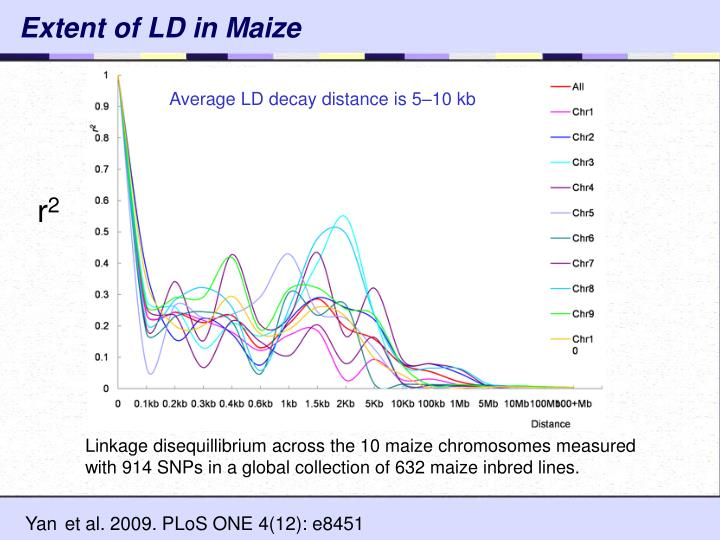 Extent of LD in Maize