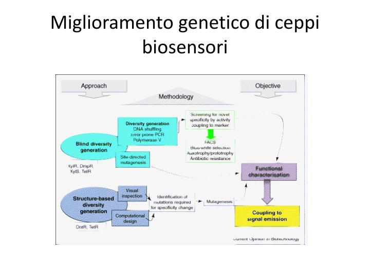 Miglioramento genetico di ceppi biosensori