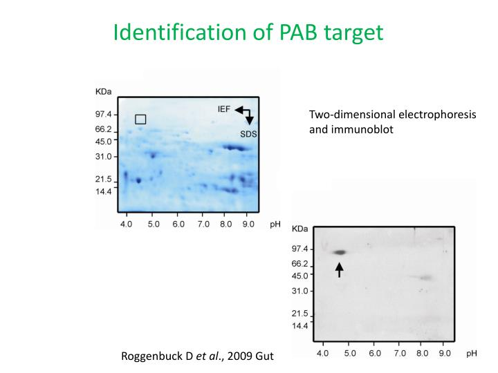 Identification of PAB target