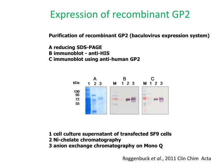 Expression of recombinant GP2