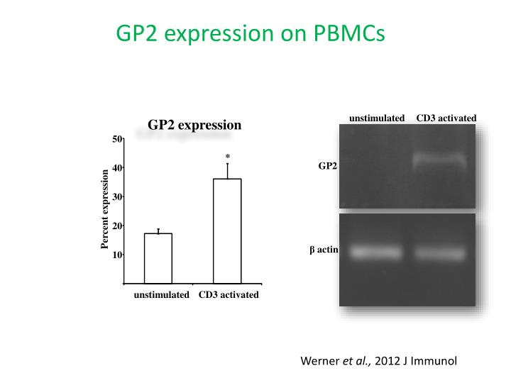 GP2 expression on PBMCs
