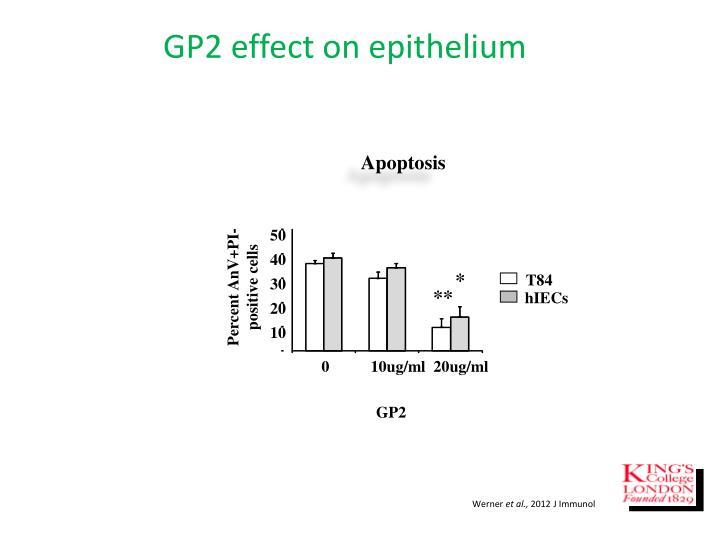 GP2 effect on epithelium