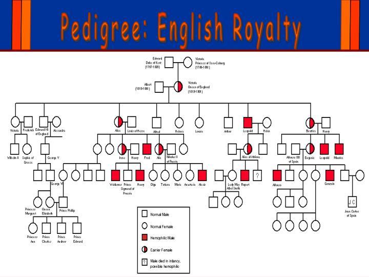 Pedigree: English Royalty