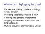 where can phylogeny be used