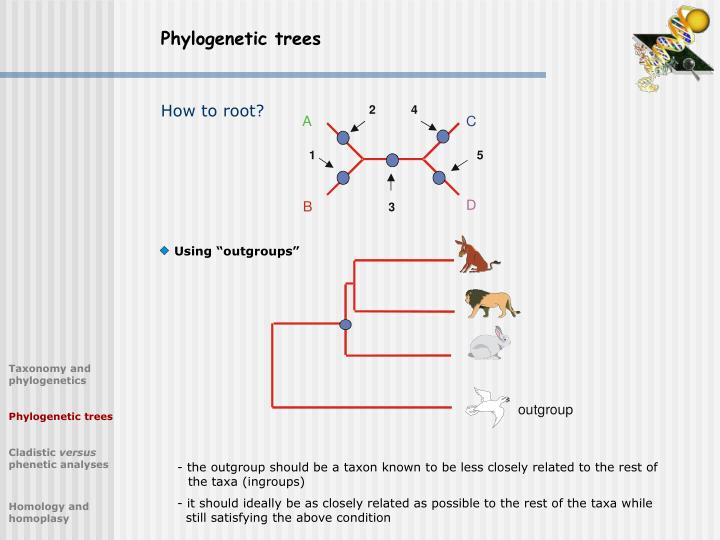 - the outgroup should be a taxon known to be less closely related to the rest of
