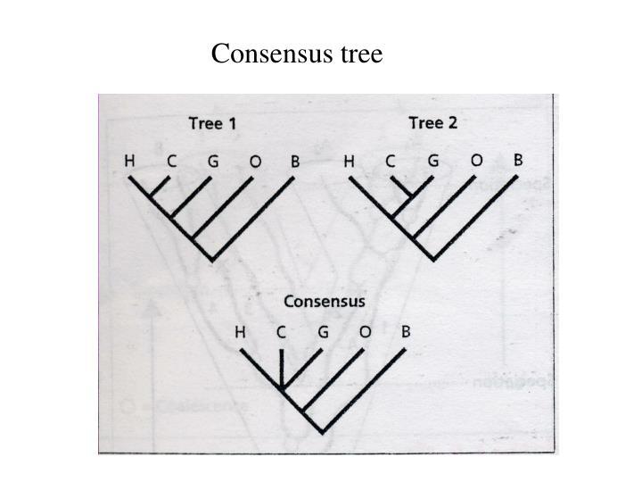 Consensus tree