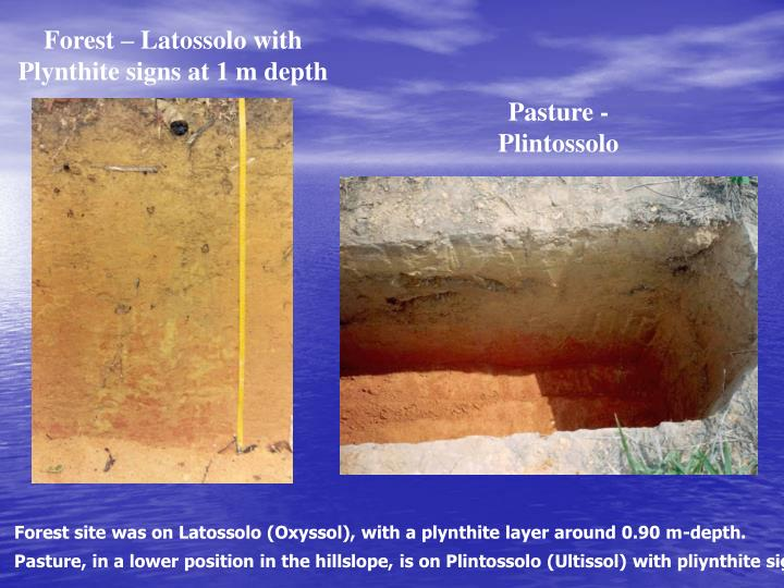 Forest – Latossolo with Plynthite signs at 1 m depth