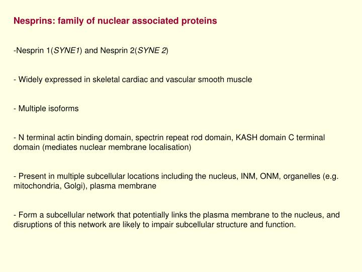 Nesprins: family of nuclear associated proteins
