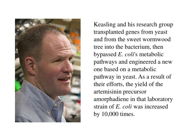 Keasling and his research group transplanted genes from yeast and from the sweet wormwood tree into the bacterium, then bypassed