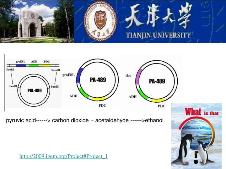 pyruvic acid------> carbon dioxide + acetaldehyde ------>ethanol