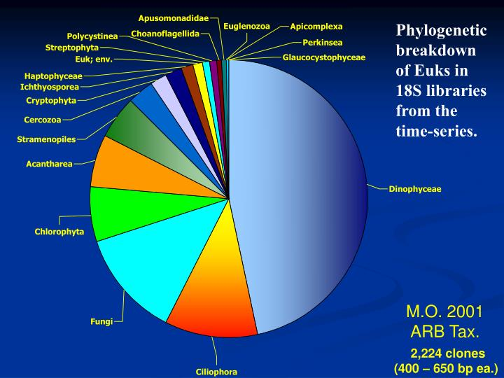 Phylogenetic breakdown of Euks in 18S libraries from the time-series.
