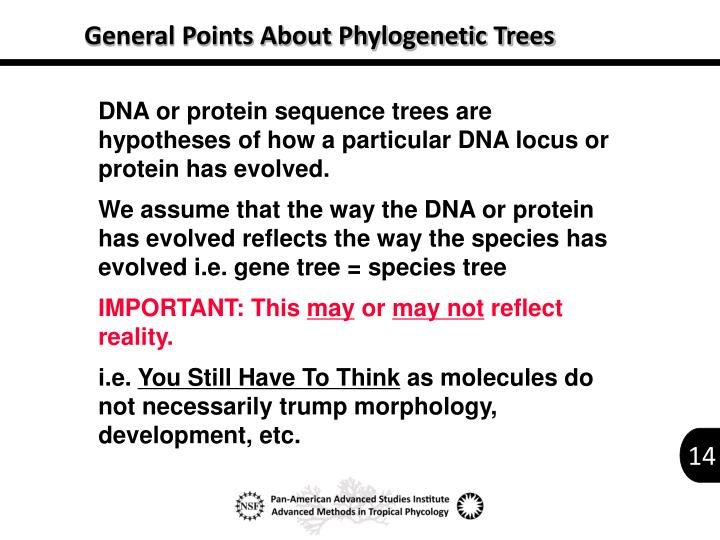 General Points About Phylogenetic Trees