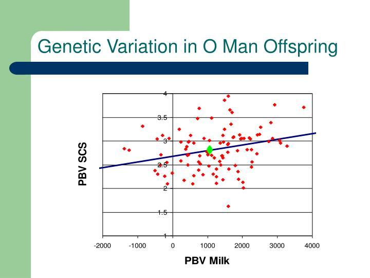 Genetic Variation in O Man Offspring