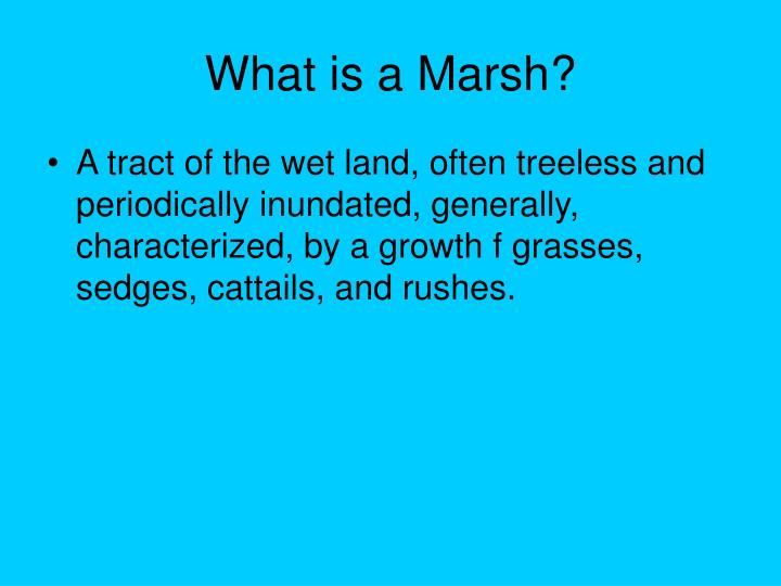 What is a Marsh?