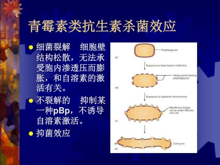 青霉素类抗生素杀菌效应