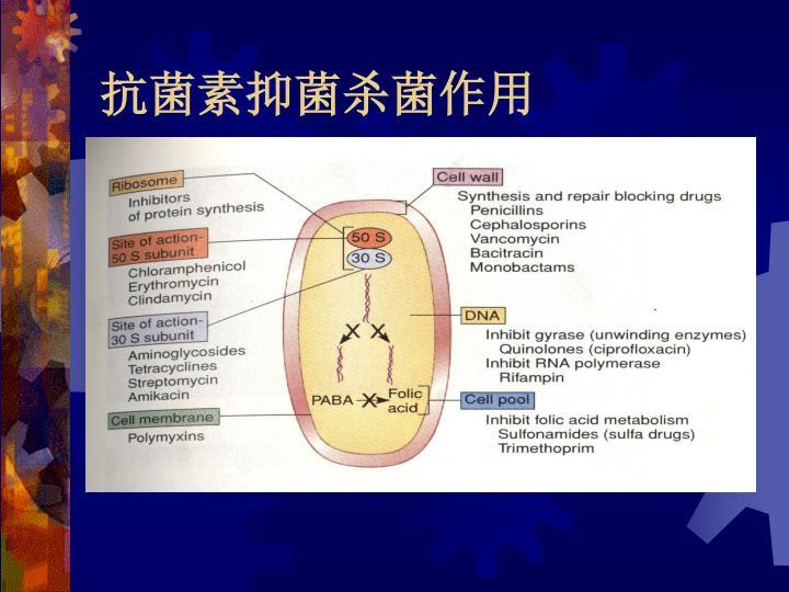 抗菌素抑菌杀菌作用