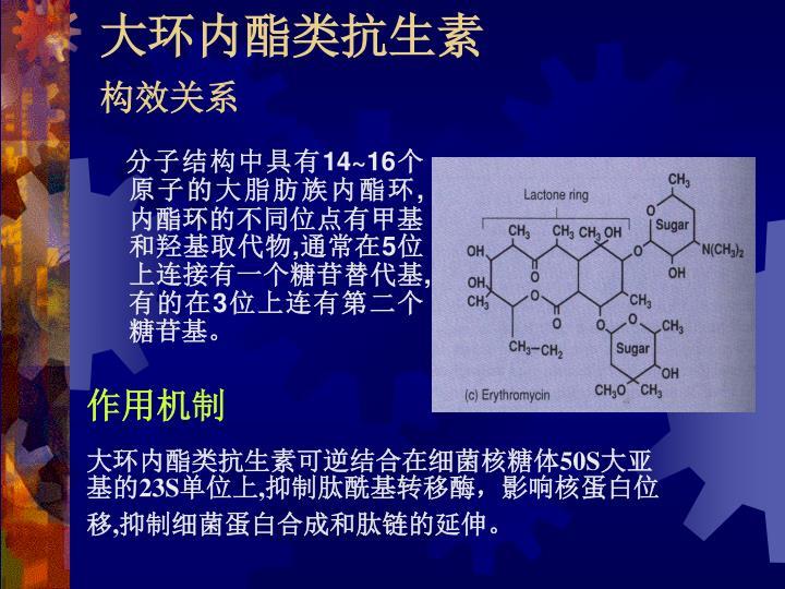 大环内酯类抗生素