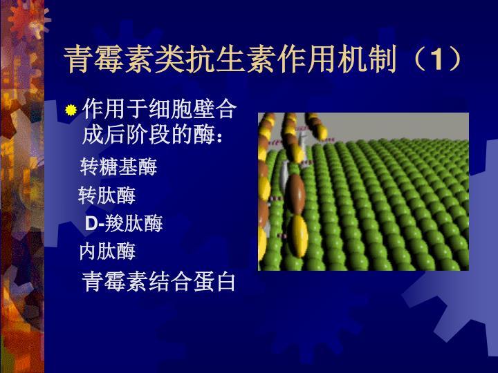 青霉素类抗生素作用机制(