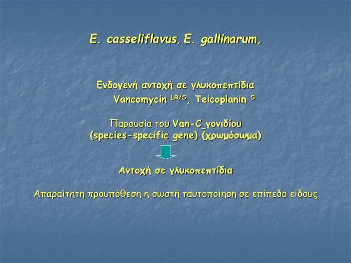 E. casseliflavus