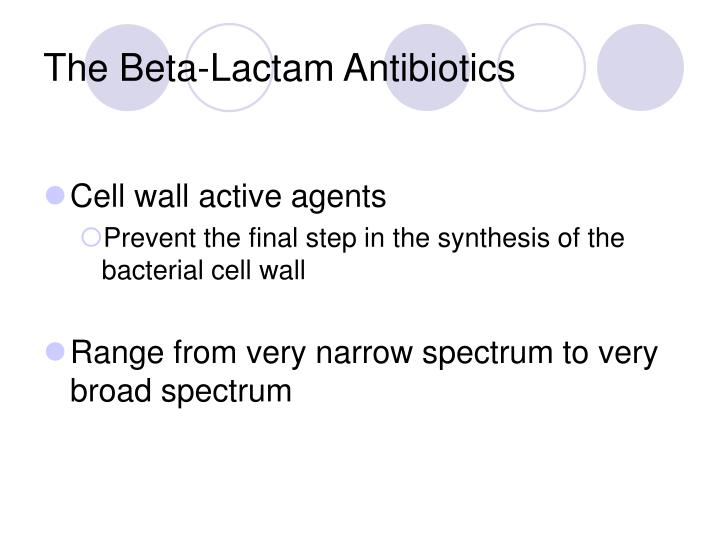 The beta lactam antibiotics
