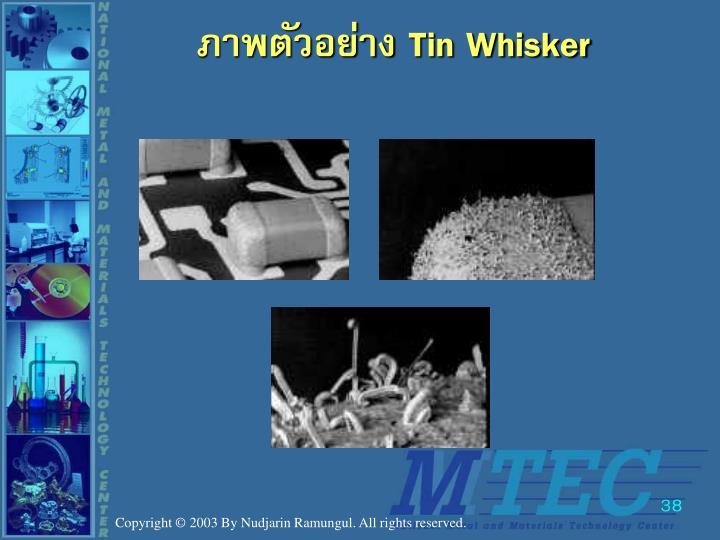 ภาพตัวอย่าง Tin Whisker