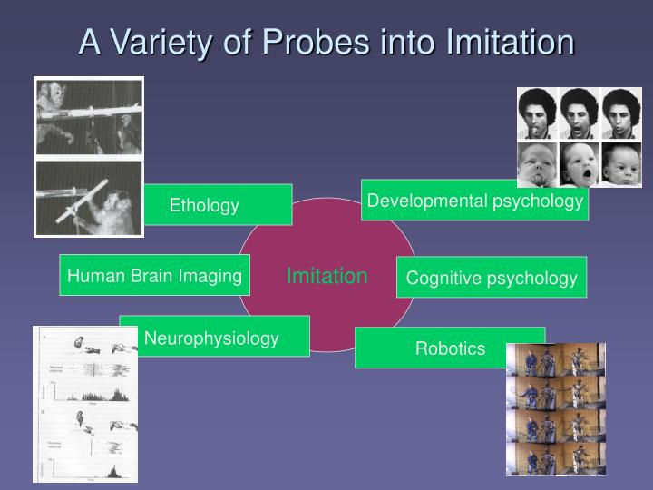 A Variety of Probes into Imitation