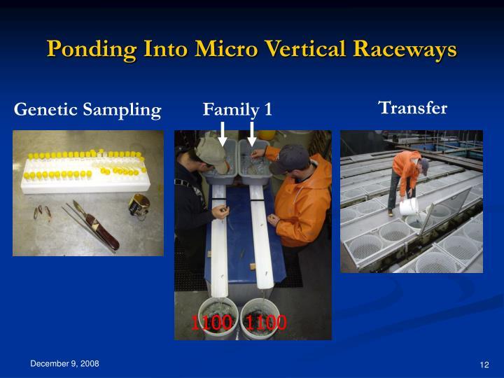 Ponding Into Micro Vertical Raceways