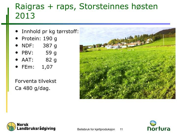 Raigras + raps, Storsteinnes høsten 2013