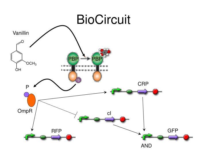 BioCircuit