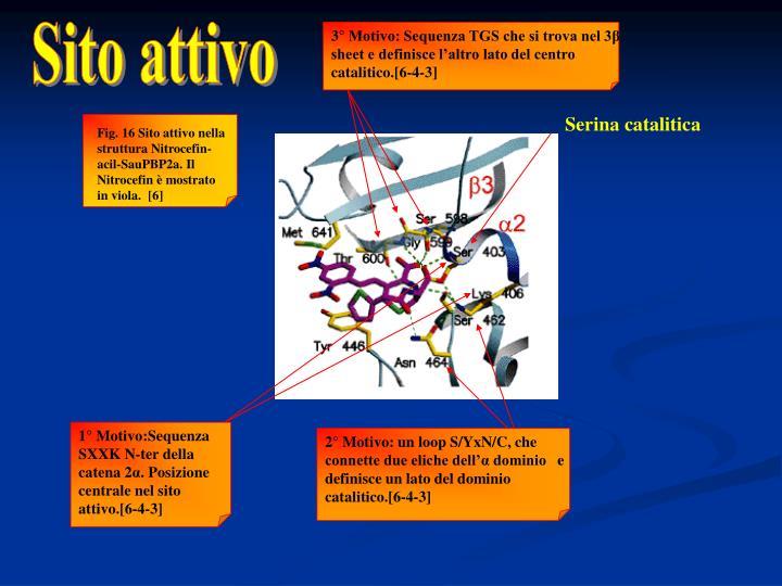 3° Motivo: Sequenza TGS che si trova nel 3β sheet e definisce l'altro lato del centro catalitico.[6-4-3]