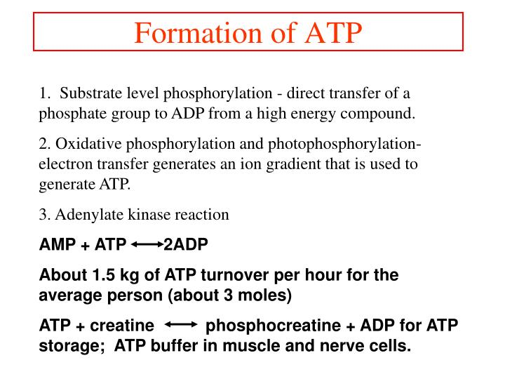 Formation of ATP