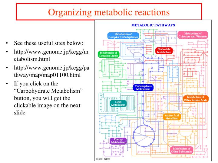 Organizing metabolic reactions