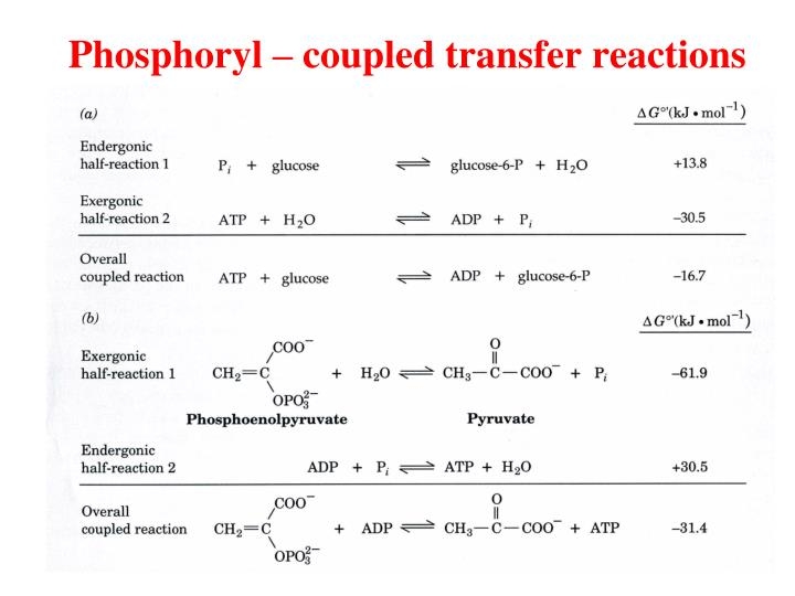 Phosphoryl – coupled transfer reactions