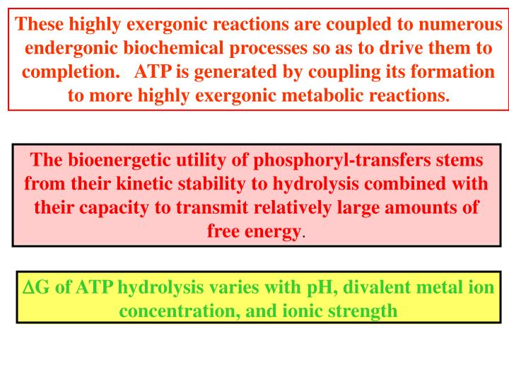 These highly exergonic reactions are coupled to numerous endergonic biochemical processes so as to drive them to completion.   ATP is generated by coupling its formation to more highly exergonic metabolic reactions