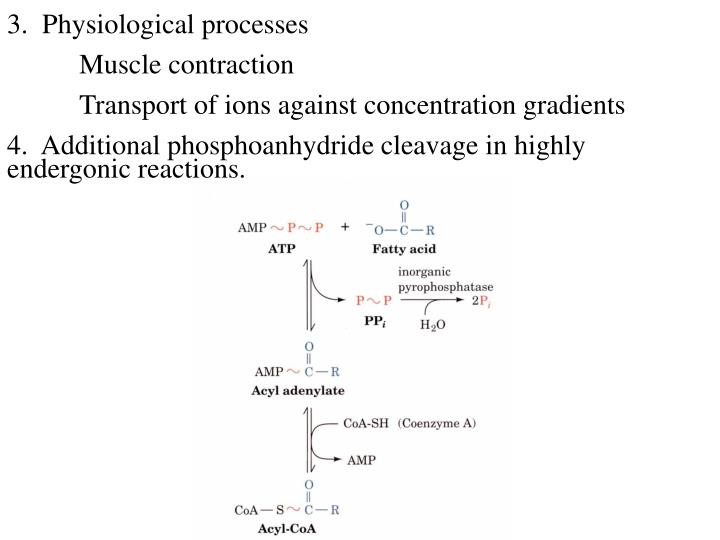 3.  Physiological processes