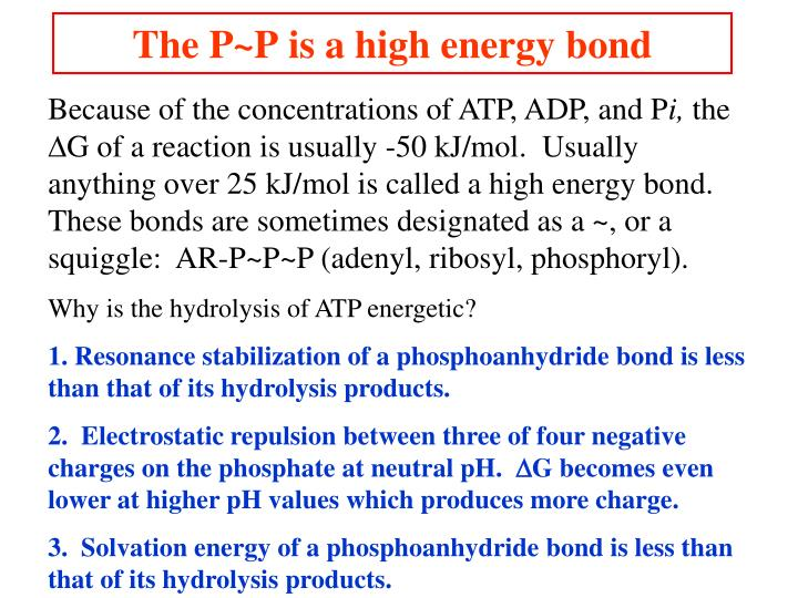 The P~P is a high energy bond