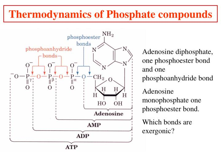 Thermodynamics of Phosphate compounds