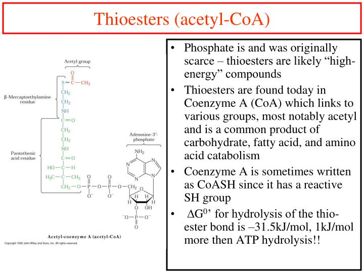 Thioesters (acetyl-CoA)