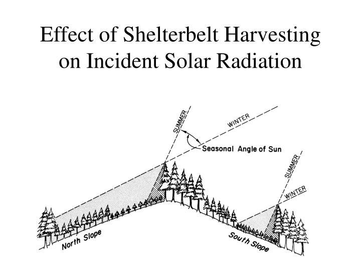 Effect of Shelterbelt Harvesting on Incident Solar Radiation