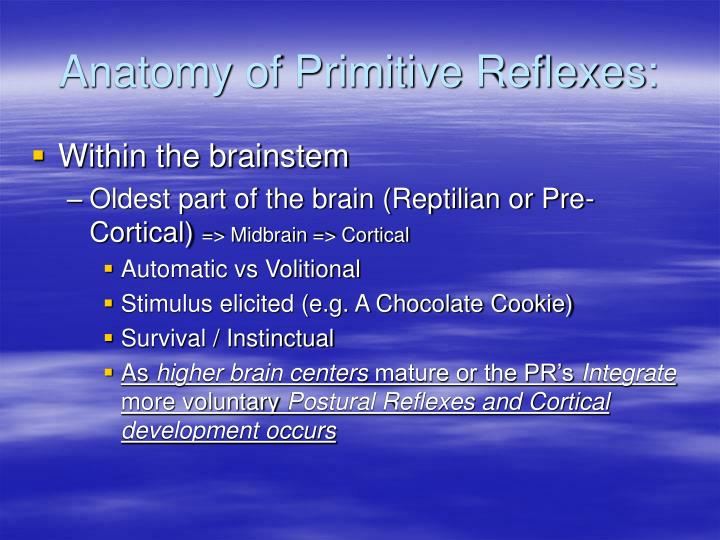 Anatomy of Primitive Reflexes: