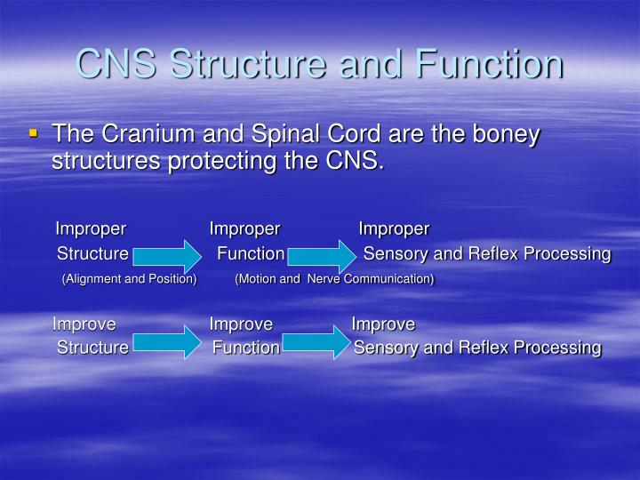 CNS Structure and Function