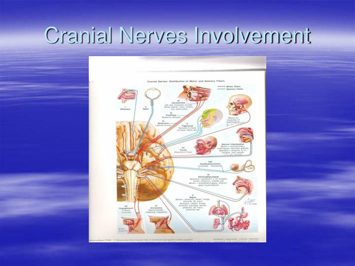 Cranial Nerves Involvement