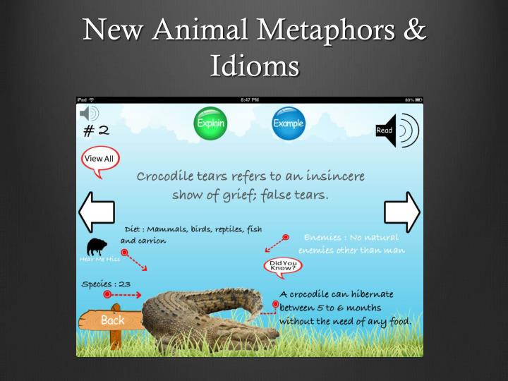 New Animal Metaphors & Idioms
