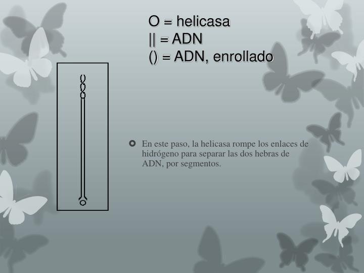 O = helicasa