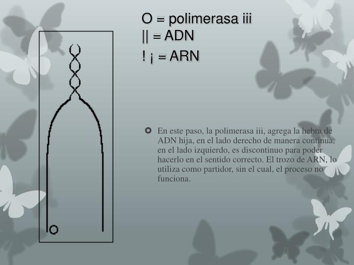 O = polimerasa iii