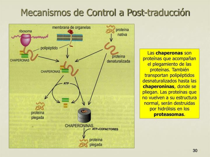 Mecanismos de Control a Post-traducción