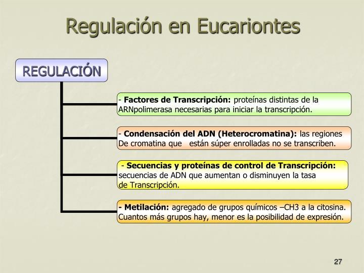 Regulación en Eucariontes