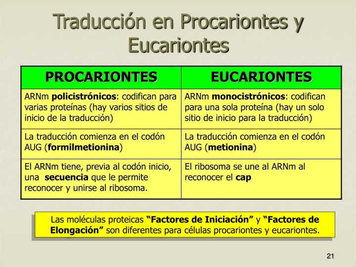 Traducción en Procariontes y Eucariontes