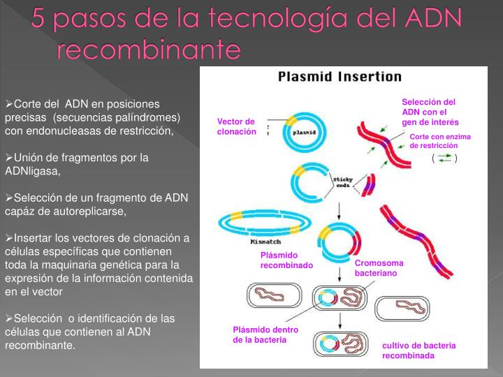 5 pasos de la tecnología del ADN