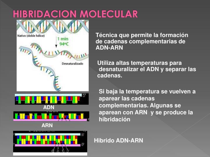 HIBRIDACION MOLECULAR